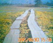 200506031550.jpg