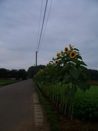 himawari_line_road