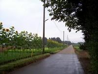 himawari_line