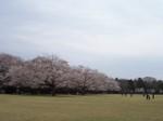 Ohanamihiroba2_1