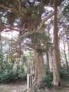 Taiboku